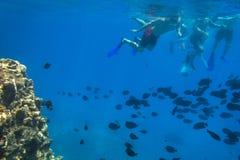 Cenário subaquático do Mar Vermelho com peixes tropicais fotografia de stock royalty free