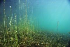 Cenário subaquático no rio fotografia de stock