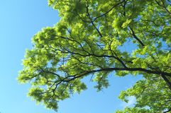 Cenário surpreendente com árvore e o céu NENHUM 4 foto de stock royalty free