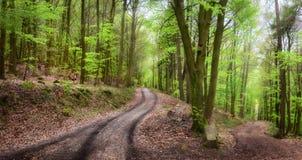Cenário tranquilo da floresta Fotografia de Stock