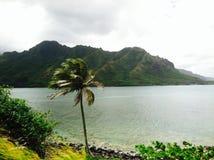 Cenário tropical de Havaí com palmeira fotografia de stock
