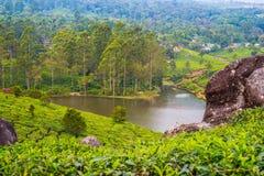 Cenário tropical de Kerala, Índia sul Imagem de Stock Royalty Free