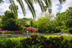 Cenário tropical do jardim Imagem de Stock Royalty Free