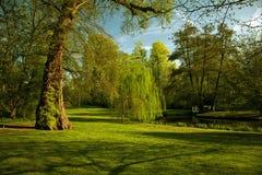 Cenário verde Fotos de Stock Royalty Free