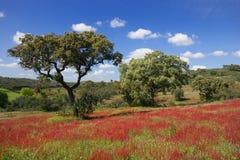 Cenário verde e vermelho Imagem de Stock Royalty Free