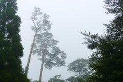 Cen?rio nevoento com as silhuetas das ?rvores na caminhada at? montanhas do kogen de Ebino, Kyushu, Jap?o fotografia de stock