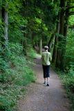 Cena 3 da floresta Imagem de Stock