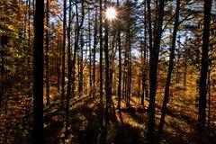 Cena 8562 do outono de Pensilvânia imagens de stock