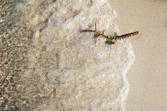 Cena abstrata de um galho molhado na areia da praia em uma costa do lago fotos de stock royalty free