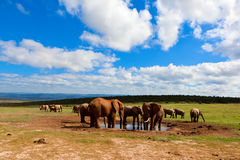 Cena africana do waterhole Imagens de Stock