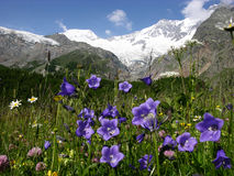 Cena alpina Foto de Stock Royalty Free