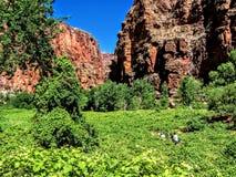 Cena ao longo do parque nacional o Arizona E.U. de Grand Canyon da reserva indígena de Havasupai da angra de Havasu fotografia de stock