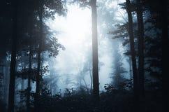Cena assombrada da floresta Fotos de Stock