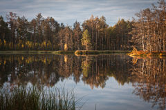 Cena bog in early morning Royalty Free Stock Photography