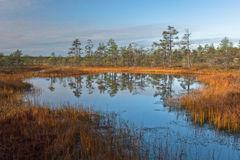 Cena bog in early morning Royalty Free Stock Photo