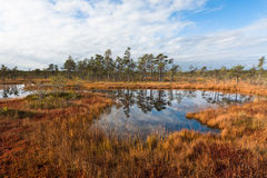 Cena bog in sunny evening Stock Photo