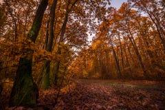 Cena bonita da floresta na manhã no outono imagem de stock