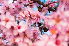 Cena bonita da natureza com árvore de florescência foto de stock