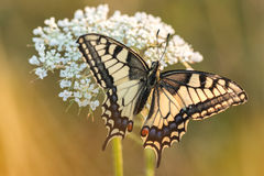 Cena bonita da natureza com borboleta Imagens de Stock Royalty Free
