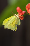 Cena bonita da natureza com borboleta Fotografia de Stock Royalty Free