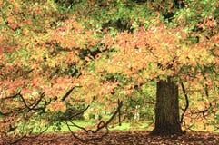 Cena bonita da queda do outono com cores vibrantes Imagem de Stock