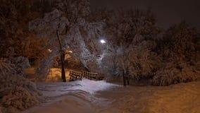 Cena bonita do inverno no parque Imagem de Stock