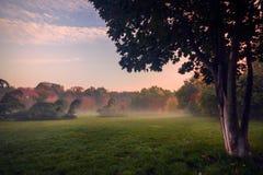 Cena bonita do outono na manhã no parque em uma aleia imagens de stock