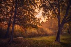 Cena bonita do outono na manhã no parque perto do lago fotos de stock