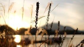 Cena bonita do por do sol com campo de grama e sopro do vento vídeos de arquivo
