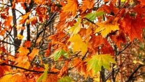 Cena colorida da natureza no outono Foto de Stock