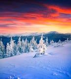 Cena colorida do inverno na montanha nevado Imagem de Stock