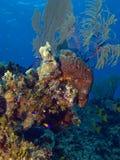 Cena colorida do recife de Brac do caimão Fotografia de Stock Royalty Free
