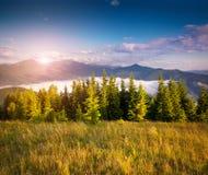 Cena colorida do verão nas montanhas Carpathian Imagem de Stock Royalty Free