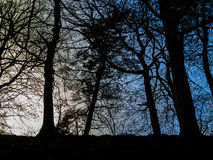 Cena com árvore retroiluminada Imagens de Stock