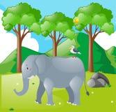Cena com elefante e pássaro no campo Imagens de Stock Royalty Free