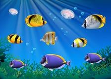 Cena com os peixes coloridos que nadam debaixo d'água ilustração do vetor