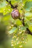 Cena confortável do jardim com caracol do bosque Foto de Stock