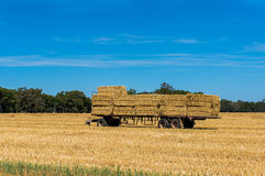 Cena da agricultura O reboque dos fazendeiros carregou com os pacotes de feno no campo Imagens de Stock