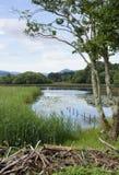 Cena da beira do lago de Killarney Foto de Stock