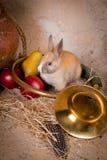 Cena da caça e coelho vivo Imagem de Stock Royalty Free