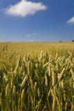 Cena da colheita do verão Imagens de Stock