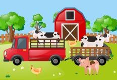 Cena da exploração agrícola com as vacas no caminhão Fotografia de Stock
