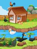 Cena da exploração agrícola com patos e galinhas ilustração stock