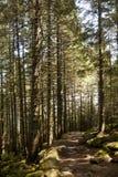 Cena da floresta Fotografia de Stock Royalty Free
