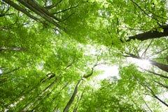Cena da floresta Imagens de Stock