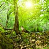 Cena da floresta Fotos de Stock Royalty Free