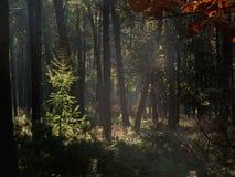 Cena da floresta Fotos de Stock