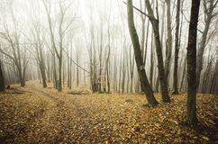 Cena da floresta do outono com folhas caídas Imagens de Stock