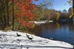 Cena da lagoa do outono do inverno fotos de stock