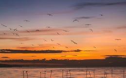 Cena da manhã de gaivotas do voo Fotos de Stock Royalty Free